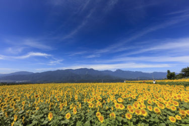 大自然を満喫できる八ヶ岳・蓼科高原の田舎暮らし・移住・別荘ライフの魅力と注意点
